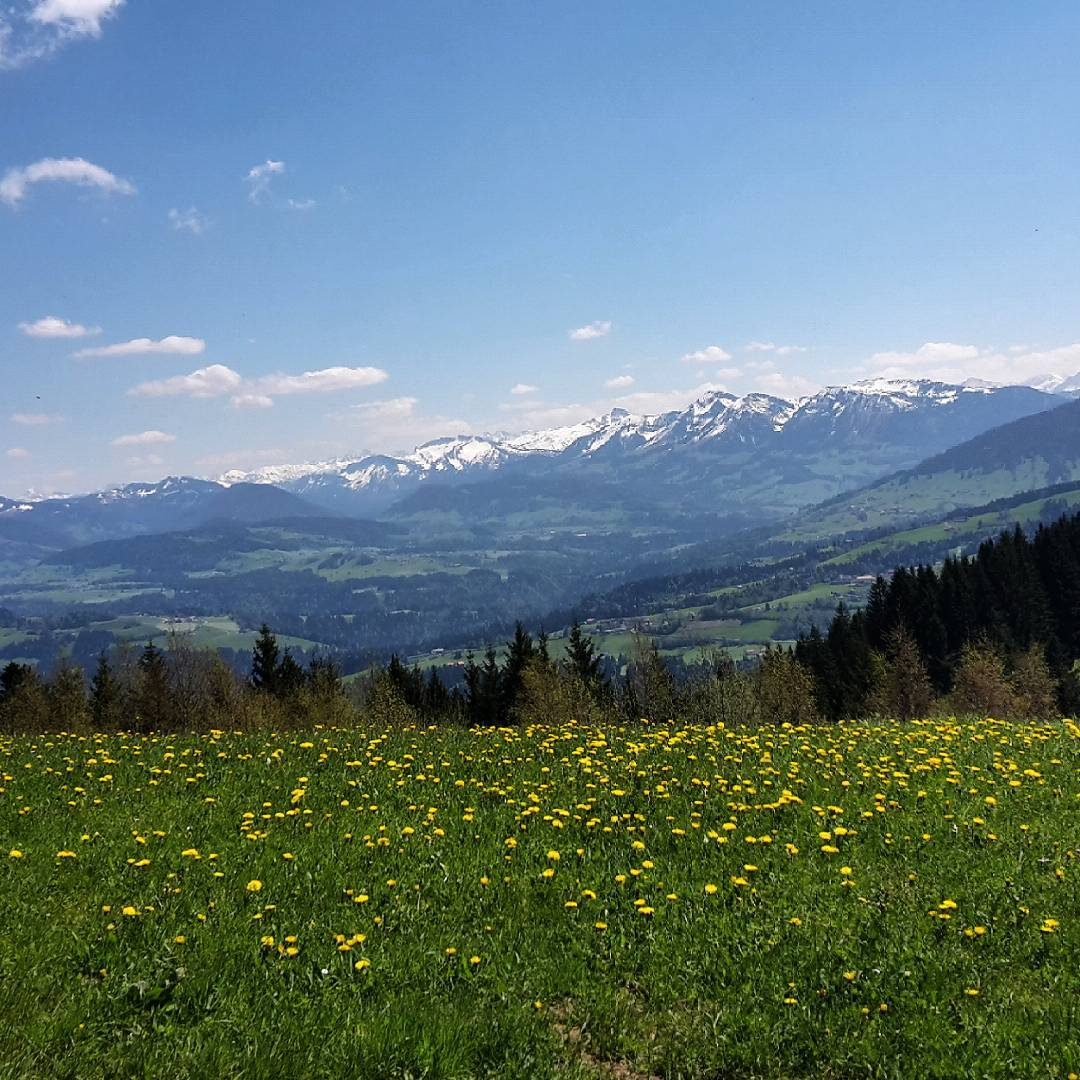Spring time at the Pfänderspitze